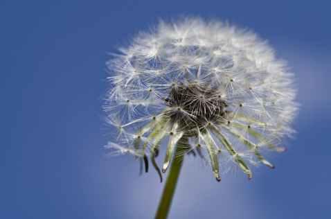 close up of dandelion against sky